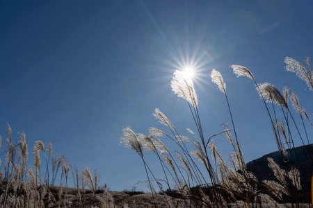 Susukihara at the foot of Mt. Fuji Фото со стока