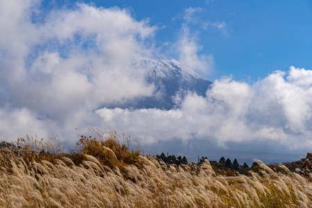 Miscanthus sinensis Asagiri-Kogen plateau and Mount Fuji