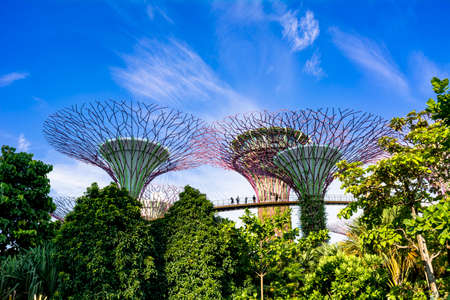 Gardens by the Bay in Singapore 新聞圖片