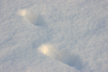 two human steps in the snow on a Sunny day, frosty walk on the freshly fallen snow. Shine of snow in sun on a frosty day