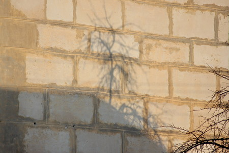 the shadow of a tree on brick wall. Sunny day, imprint of reality. play of shadows and light. refraction of light