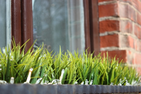 the first vegetation after winter, window decoration. grass in a vase against a window and brick wall. partial focus