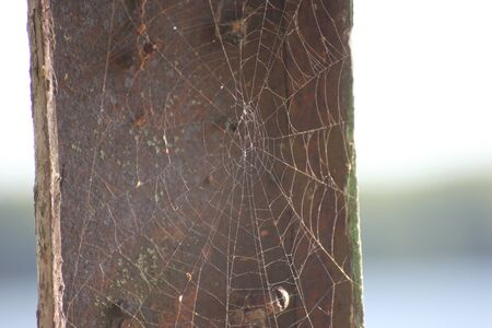 a web on a gray background, house and a spider trap. a net of fine threads glitters in the sun, survival. Imagens