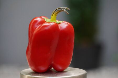 Red Bulgarian pepper with black ponytail in the background of the building, stale food. bacteria multiply in vegetables Stockfoto