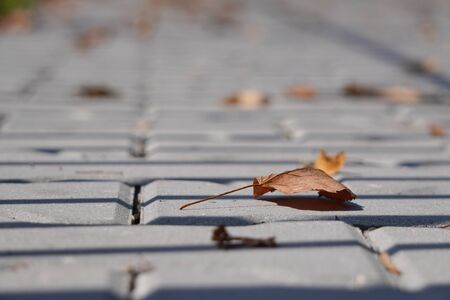 yellow dry autumn leaves have fallen and lie on sidewalk. City street with sidewalk. Autumn season with beautiful color. Abstract symbol of autumn. close up, grey tiles of pavement Banco de Imagens