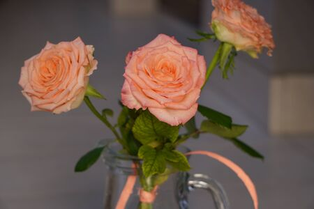 three coral roses with the green leaves in contrast light, Gently pink roses close up at sun. Beauty tender flower with light transmitting petals on light background in pastel colors is romantic gift