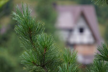 blurred wooden house near forest and mountains. pine branches in the foreground. eco-friendly way of life. beautiful and cozy country house Banco de Imagens