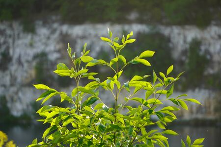 bright green leaves in the sun on background of rocks and green water. natural beauty of nature Standard-Bild - 129250079