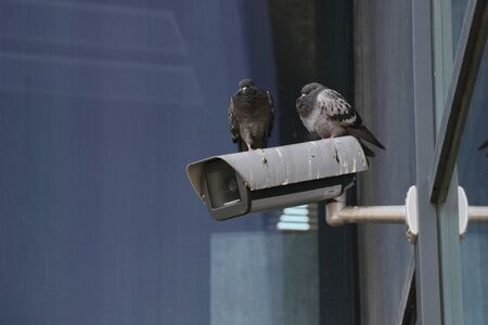 modern surveillance camera and pigeons sitting on it. house for birds, watching the passers-by. technical security
