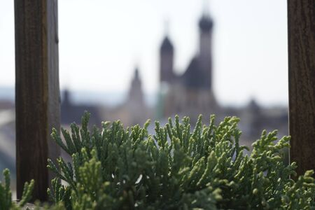 blurred view of old town through Tuya. the green branch of the plant in the foreground. Фото со стока