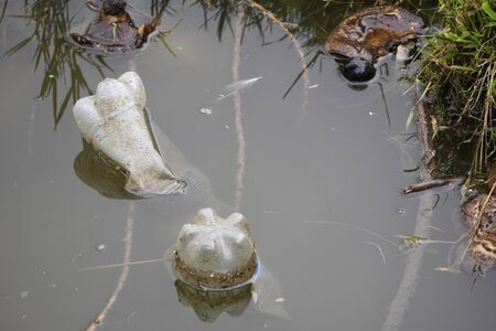 two plastic drink bottles floating in the lake, dangerous plastic garbage. care for the environment. zero waste.