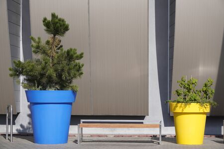 two large flowerpots with trees near the shop, blue and yellow flowerpots with flowers in the city, decoration of stone buildings, modern solution Banco de Imagens