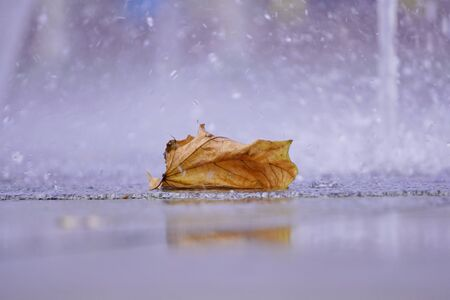 the fallen yellow leaf pours rain drops, rainy season, change of seasons, copyspace, autumn background