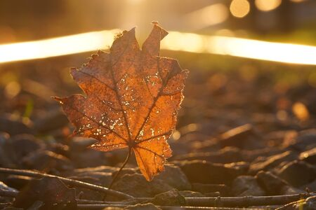 autumnal fallen maple leaf lies on the rails in the soft, contoured sunset light. change of seasons in the city.
