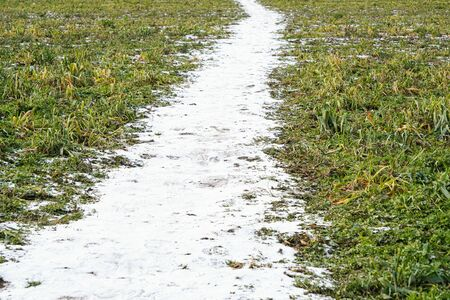 Spring thawed path of snow on the ground in field near green grass, Sunny and warm weather, changing seasons.
