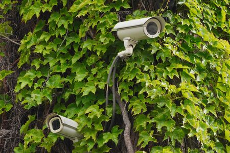 Two cameras CCTV on facade of building with green leaves on street, security in the city. Covert shooting of what is happening. Modern technologies and equipment