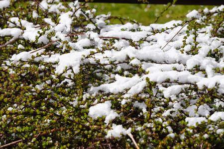 white snow on green grass background. Banque d'images