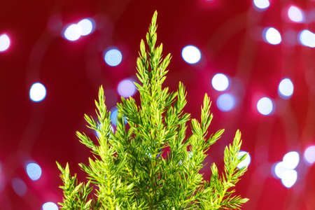 A small green fir tree on a red background with lights. New year or Christmas decorations, preparation for holidays.