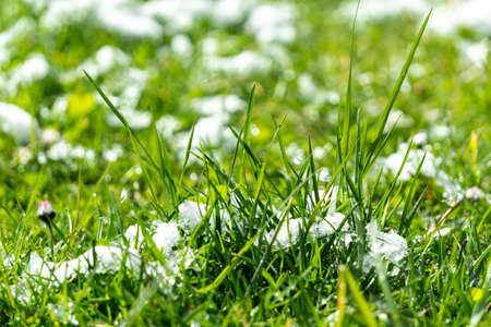the first white snow on still green grass on sunny day. autumn or spring, contrast weather. changing season. Banque d'images