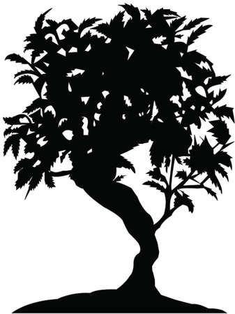 dry leaf: bonsai tree