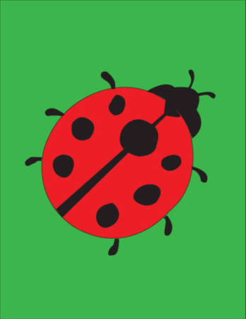 red ant: ladybug   Illustration