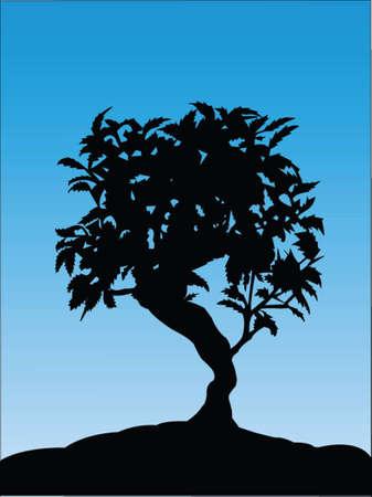bonsai tree: bonsai tree vector