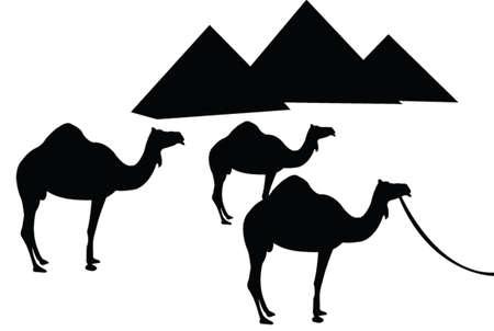 vecteur de chameau