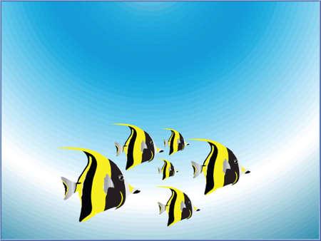 royal angelfish: tropical fish
