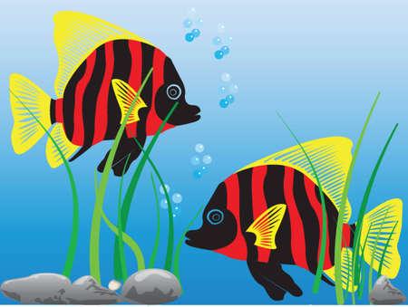 tropical fish - vector Stock Vector - 10469414