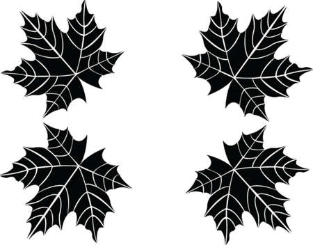 leaf - vector Illustration