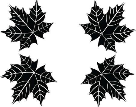 leaf - vector Illustration