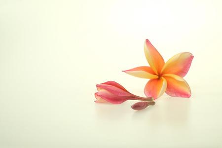 tahitian: Frangipani isolated on White background