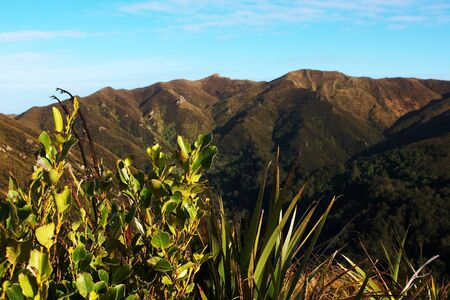 new zealand flax: Native shrubs and flax on Rosella Ridge, Pulpit Rock in background, Dunedin, New Zealand Stock Photo
