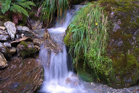 aspiring: Small waterfall with ferns in Rees Valley, Mount Aspiring National Park, New Zealand Stock Photo