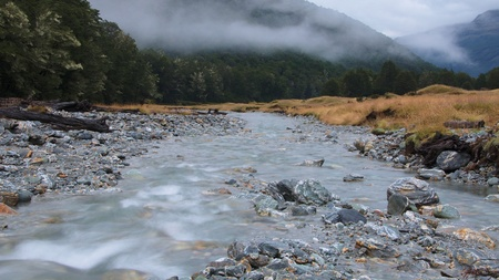 dampness: Dampness in the air, Slip Flat, Rees Valley, Mount Aspiring National Park, New Zealand