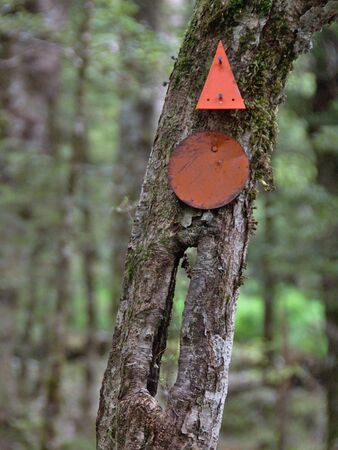 tramping: Old and new track markers, Spence Burn track, Takitimu Mountains, Southland, New Zealand Stock Photo