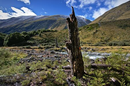 treetrunk: Dead tree-trunk in South Temple Valley, Canterbury, New Zealand Stock Photo
