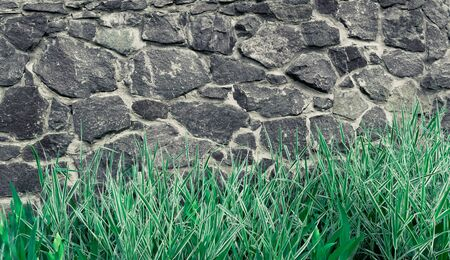Background stone wall, texture of light brick with plants of green grass and flowers.