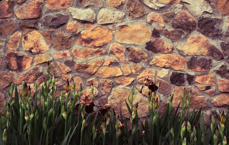 Background stone wall, texture of light brick with plants of green grass and flowers. Фото со стока
