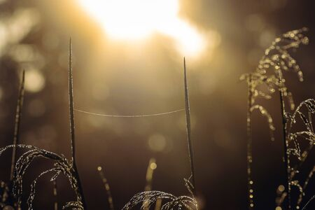 Morning dew on the grass and the web. Sunrise background. Brilliant drops of dew at sunrise, close-up.