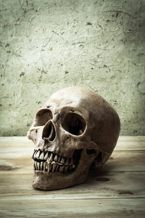 cadaver: Still Life with a Skull concept on wood background.
