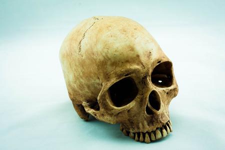 cadaver: Still Life with a Skull concept