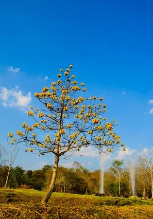 The garden at Hot fountain in Chiangmai, Thailand. (SanKamphaeng hot fountain) Chiangmai province, Thailand. Stock Photo