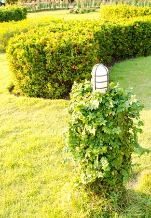 Thai garden Lamp style  with  Leaf vine on the footpath.