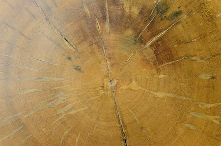 • Surface or backgroundtexture of big old Log teak.