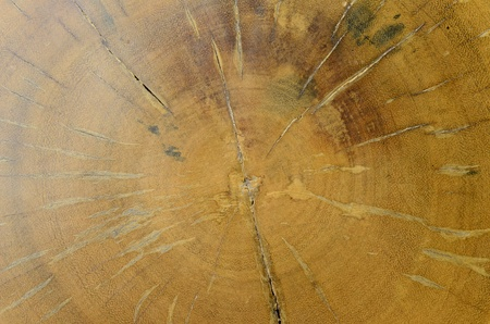 � Surface or backgroundtexture of big old Log teak. photo