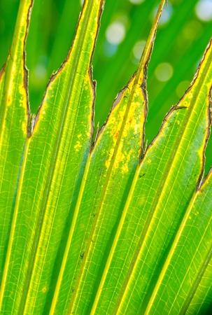 Old Leaf texture or background