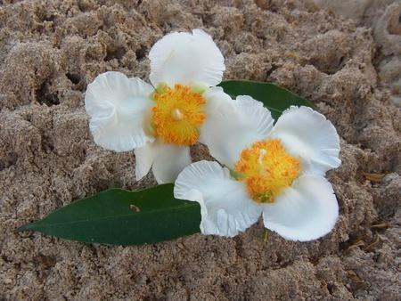 Thai   flower on anthill Stock Photo