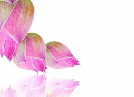 Thai Pink sweet water lily on White, Isolate, background