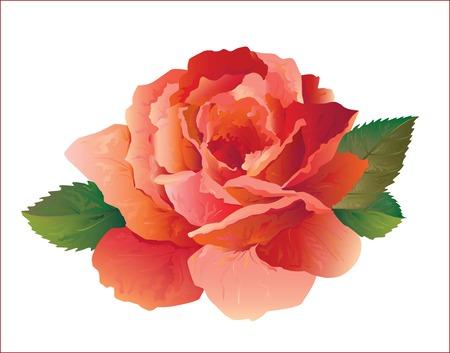 rosa rossa realistico Vettoriali